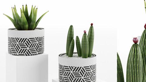 Decorative Vase_ 432_003