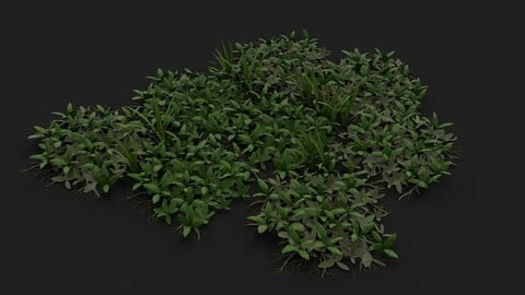 Tropical Ground Foliage