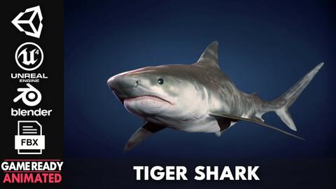 Tiger Shark - Game Ready