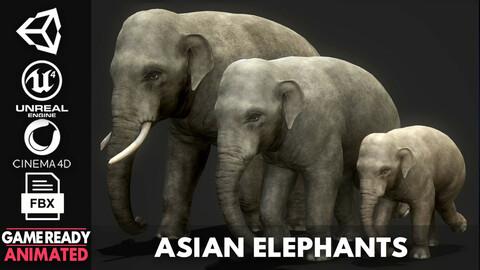 Asian Elephants - Game Ready