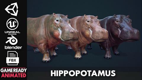 Hippopotamus - Game Ready