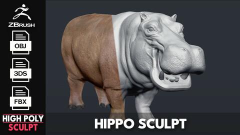 Hippopotamus - Sculpt
