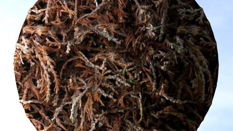 Dry Hedge 1 PBR Material