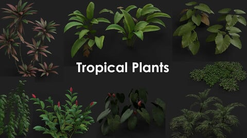 Tropical Plants Package
