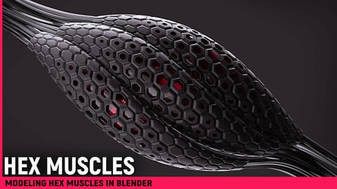 Modeling Hex Muscles in Blender