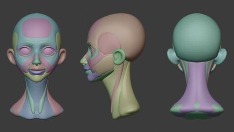 Stylized Head *Anatomy