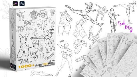 1000+  Character Pose/Anatomy study  Brushes |BUNDLE | Demo Video