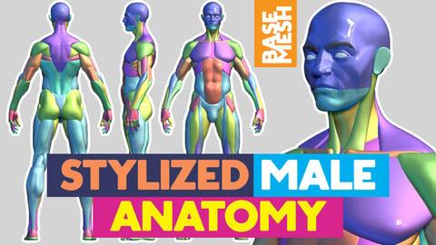 Stylized Male Anatomy base mesh