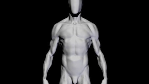 anatomy for study