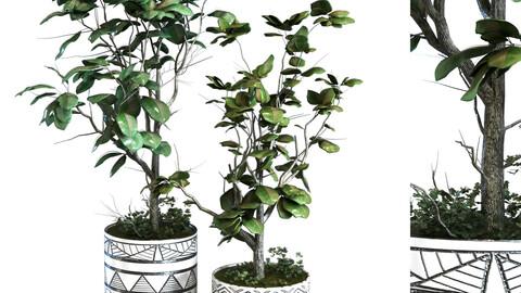 plant vase set 105
