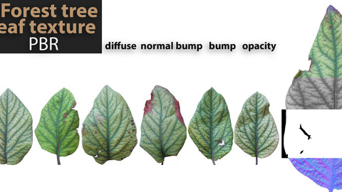 7 PBR texture of forest tree leaf
