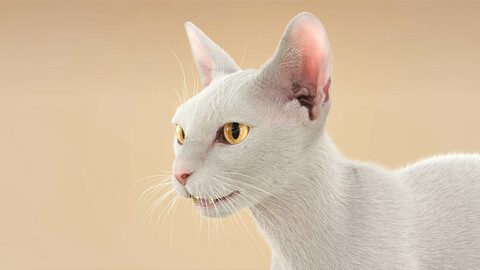Cat ShortHair White Ornatrix
