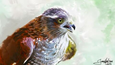 Aves del Uruguay