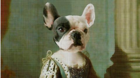 bulldog frances fansart
