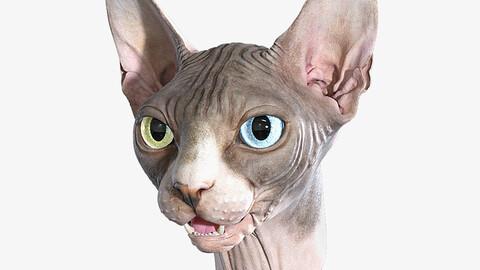 Sphynx Cat Head