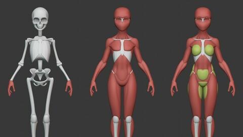 Stylized Female Anatomy