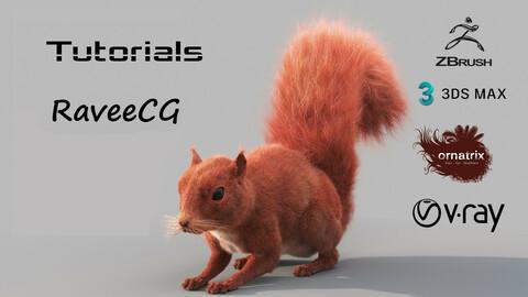 Squirrel Video Tutorials