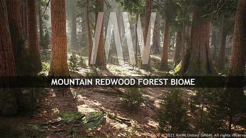 MW MOUNTAIN REDWOOD FOREST BIOME