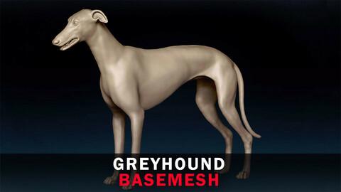 Greyhound Basemesh 3D model