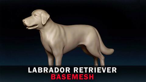 Labrador Retriever Basemesh 3D model