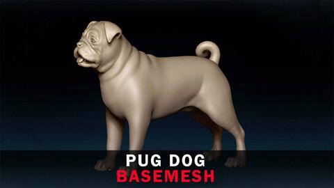 Pug Dog Basemesh 3D model