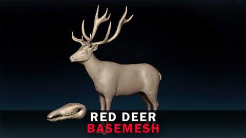 Red Deer Basemesh 3D model