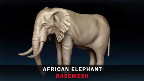 African Elephant Basemesh 3D model