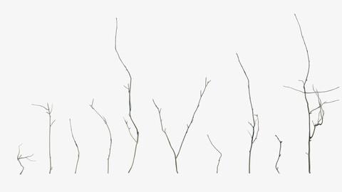 Mountain Ash Twigs
