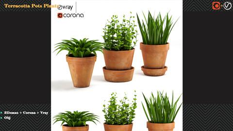 Terracotta Pots Plants