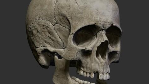 Human Skull STL + OBJ