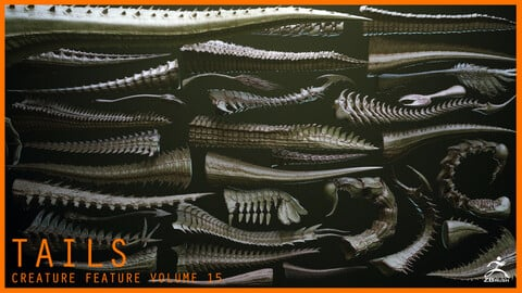 TAILS - 33 Tail Meshes & Curve Brushes