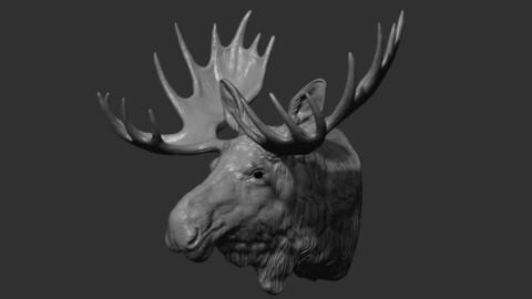 Moose Elk head