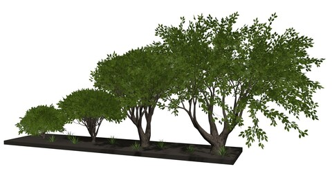 Trees and bushes 1
