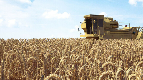 Farm tractor wheat field wheat field farmland crop wheat plant harvest