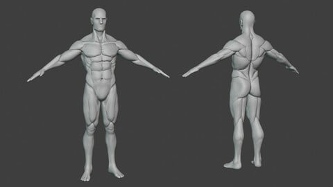 Male Body Base Athletic Sculpt