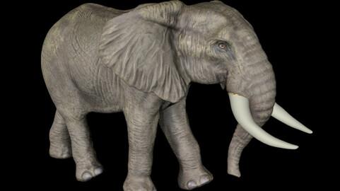 Elephant Thai elephant African elephant Chinese elephant wild
