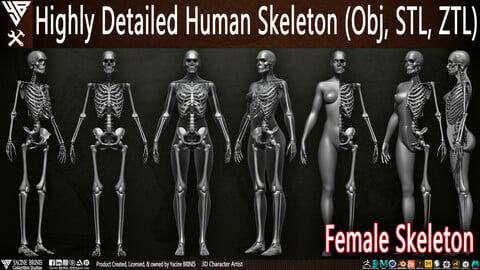 Highly Detailed Human Skeleton (Female)
