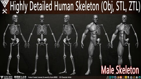 Highly Detailed Human Skeleton (Male)