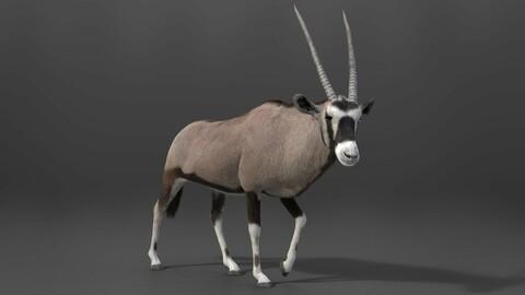 3D Animal | African Oryx Animated | VFX Grace