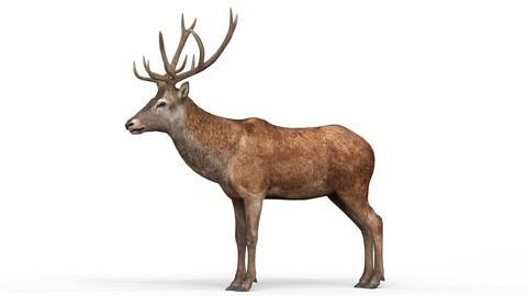 Deer With PBR Textures