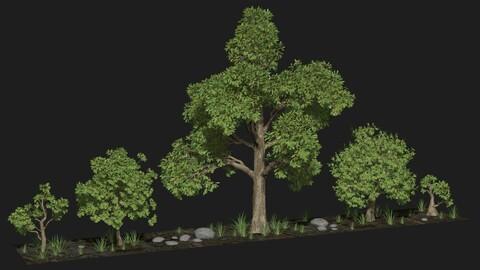 Five trees set