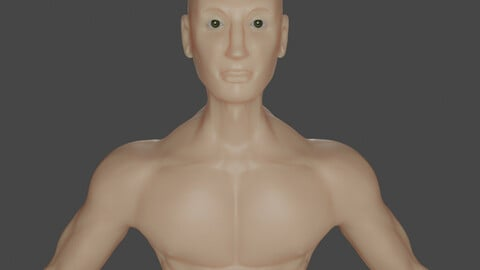 Human Male Anatomy Mesh Model