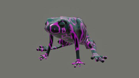 toad Atelopus varius (Atelopus longirostris)