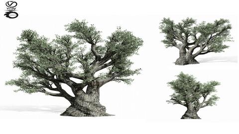 3D Assets :  olive Tree 220