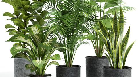 plant set 04