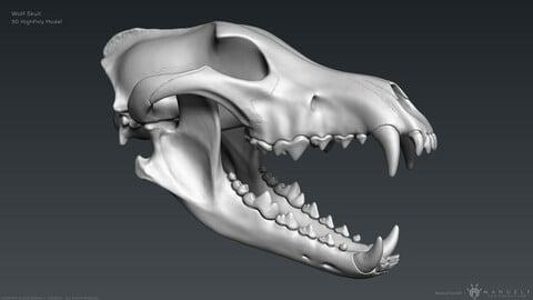 3D Wolf Skull – Highpoly Sculpture
