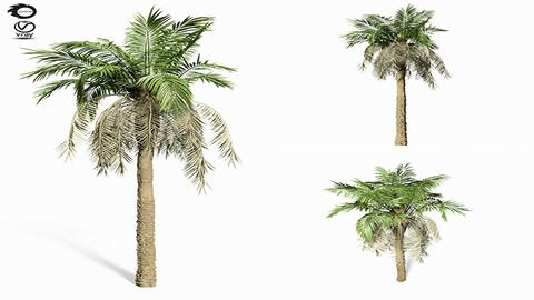 3D Assets : palm tree 8s