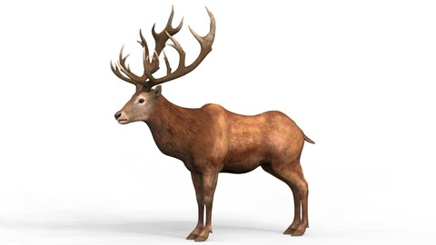 Red Deer With PBR Textures