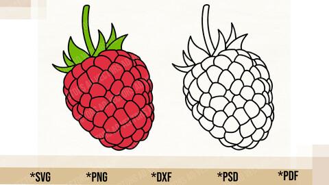 Raspberry SVG, Cricut Cut File, Raspberry PNG Printable, pdf, dxf, Raspberry Digital Download
