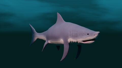 shark / haifish